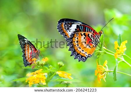 Monarch Butterfly on nature - stock photo