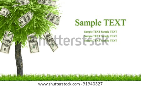 Money dollars tree growing on green grass isolated on white with space for text - stock photo