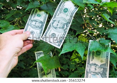 Money growing on Tree - stock photo