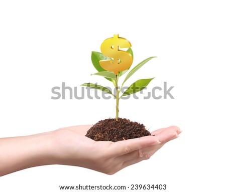 Money growing on tree, Dollar signs - stock photo