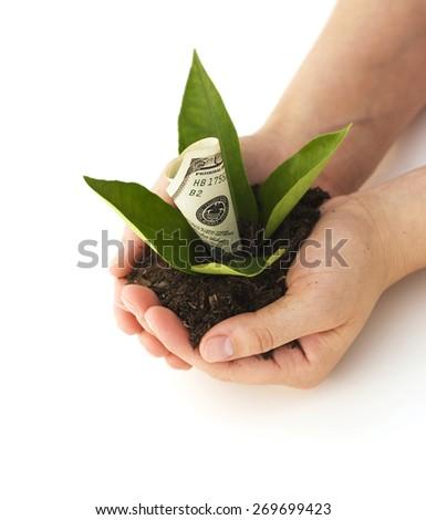 Money Growth - stock photo