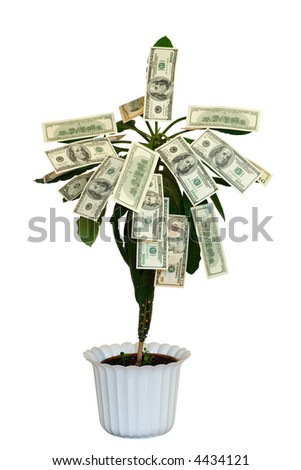 Money tree. Isolated on white. - stock photo