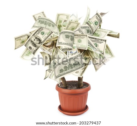 Money tree made of dollar bills, isolated on white background  - stock photo