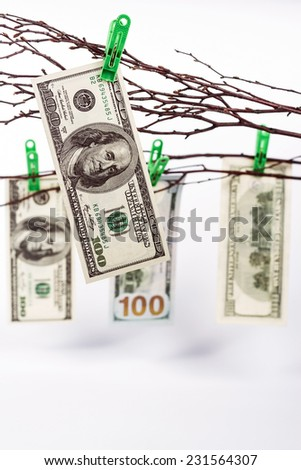 Money tree with hundred dollar bills on white background - stock photo