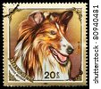 """MONGOLIA - CIRCA 1984: A Stamp printed in MONGOLIA shows image of a Collie from the series """"Dogs"""", circa 1984 - stock photo"""