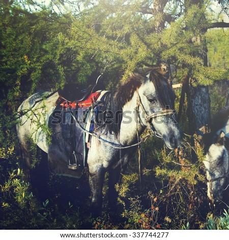 Mongolian Tsataan Horses Tranquil Solitude Nomadic Concept - stock photo