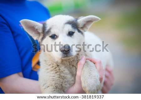 Mongrel , stray dog with sad eyes at the person on the hands - stock photo