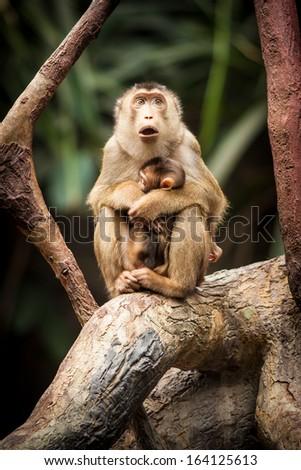 monkey - stock photo