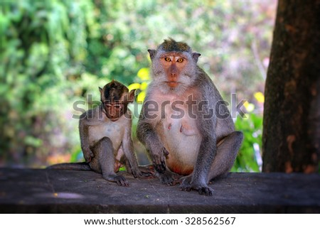 Monkey. Bali, Indonesia.  - stock photo
