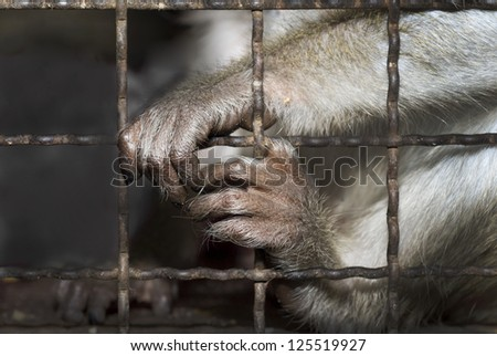 Monkey behind bars of a cage in a zoo,saving concept. - stock photo