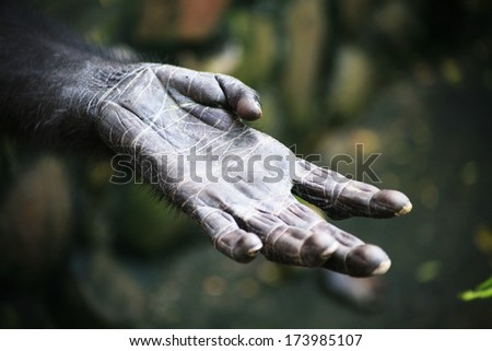 Persecution Stock Photos Images Amp Pictures Shutterstock