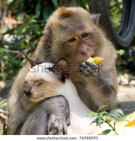 Monkey hugging cat - stock photo