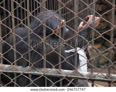 Monkey in a cage - stock photo