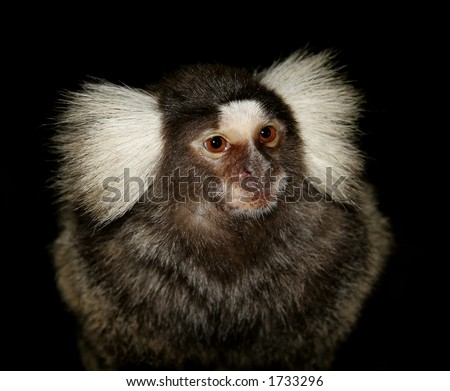 Monkey in the night - stock photo