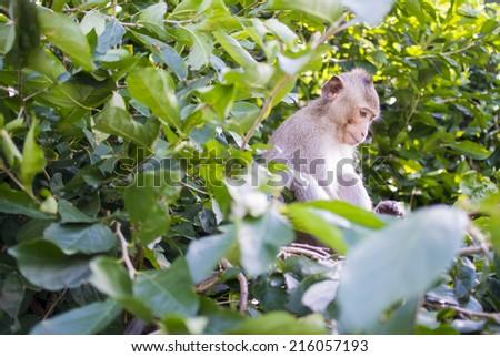 Monkey in tree - stock photo
