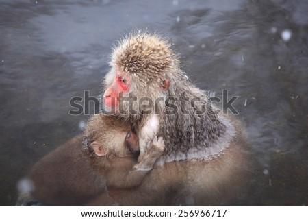 Monkey mother and baby in hot spring, Jigokudani, Nagano, Japan - stock photo