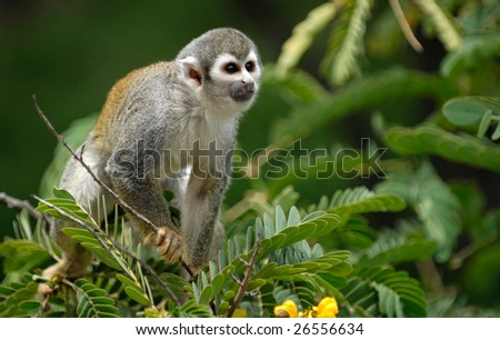 Monkey on the tree - stock photo