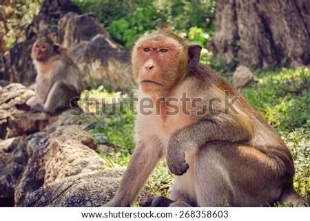 Monkey sitting - stock photo