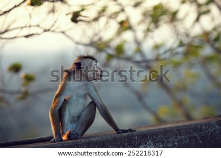 Monkey turned away ignoring the people and pretending that offended - stock photo