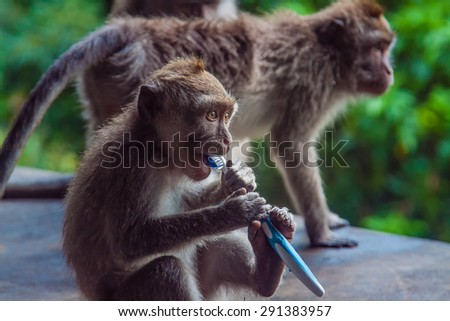 Monkey with a toothbrush - stock photo