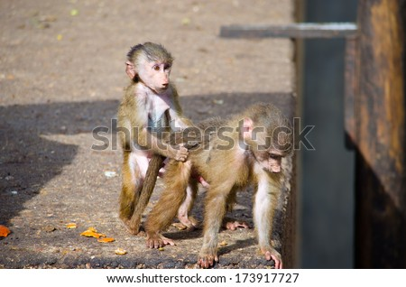 Monkeys, a zoo in Madrid - stock photo