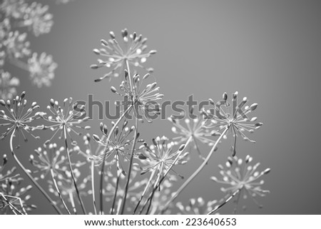 Monochrome black and white floral background for spring - stock photo