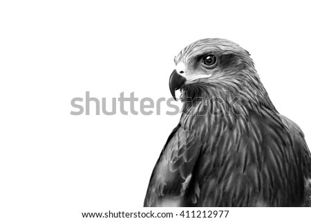 Monochrome Hawk  - stock photo
