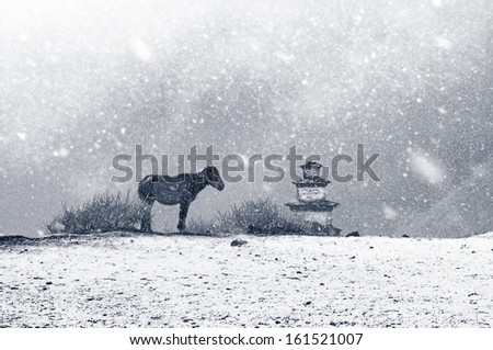 Monochrome picture of snowfall in Tibet. Lonely horse and shrine in snow flakes. - stock photo