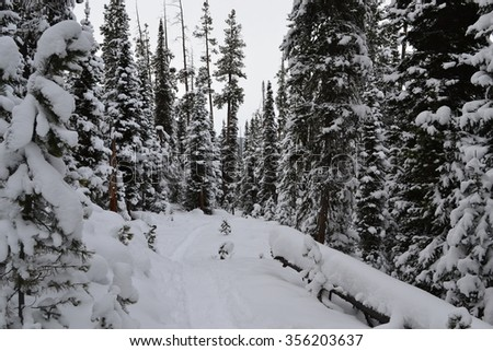 montana back country - stock photo