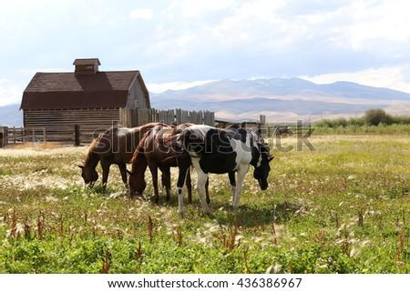 Montana ranch - stock photo