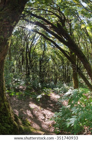 Montane forest in Doi Inthanon, take by fish eye lens - stock photo