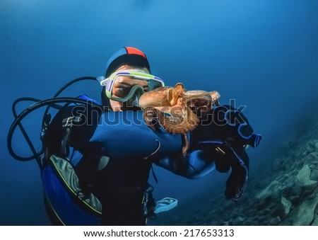 Montenegro, Adriatic Sea, U.W. photo, small octopus and diver - FILM SCAN - stock photo