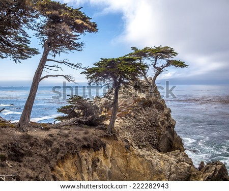 MONTEREY, CALIFORNIA - SEP 21, 2014: Lone Cypress tree view along famous 17 Mile Drive in Monterey. Sources claim it is one of the most photographed trees in North America. - stock photo