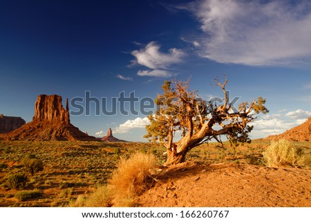 Monument Valley Lone Juniper and West Mitten. - stock photo