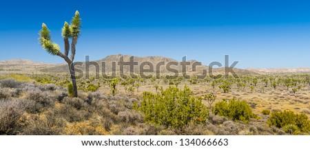 Monzogranite Mounds, Joshua Tree National Park - stock photo