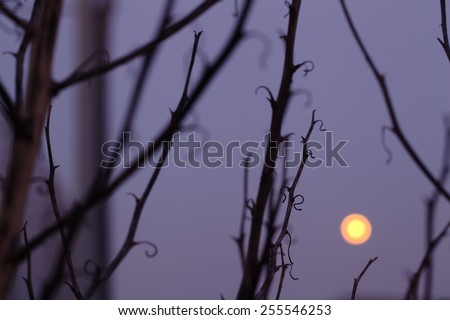 moon in the night with black trees - stock photo