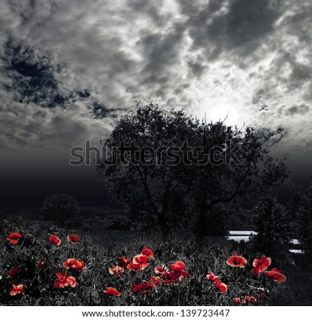 moon night and red poppy meadow - stock photo