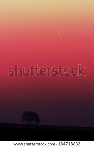 Moon rise over the tree - stock photo