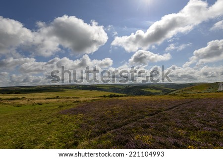 moor landscape, Exmoor  landscape of moor with heather fields and green meadows under a bright sky  - stock photo