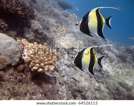 Finding nemo stock photos images pictures shutterstock for What kind of fish is nemo