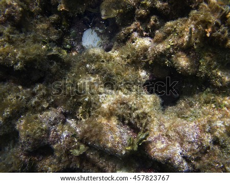moray eel hidden inside a coral reef - stock photo