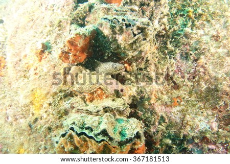 Moray eel in a hole  - stock photo