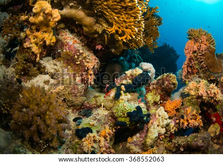 Moray night on coral reef - stock photo
