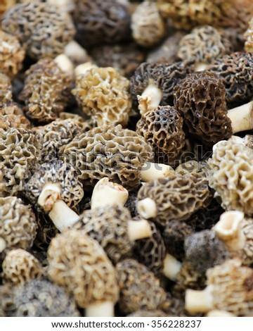 Morcheln mushroom sold on the market - stock photo