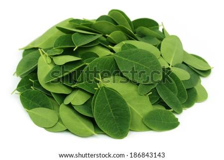 Moringa leaves over white background - stock photo