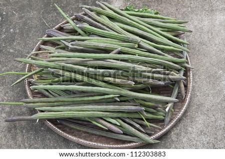 moringa thai herb - stock photo