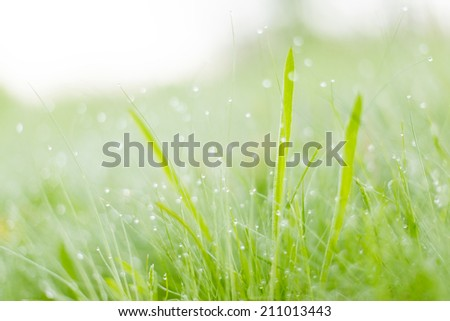 Mornind dew on the grass - stock photo