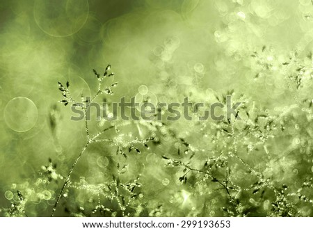 Morning dew - stock photo