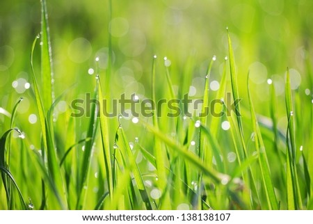Morning Dew on fresh green grass. Shallow DoF - stock photo