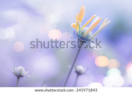 Morning dew on grass with yellow flower - stock photo